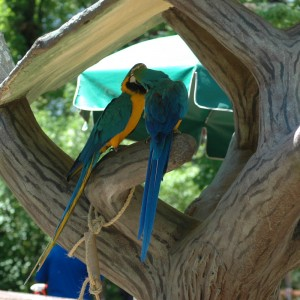 Wildlife Reserve - Macaws - Animals - 2014
