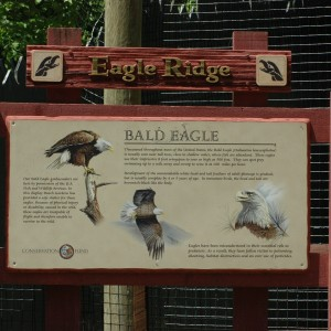 Wildlife Reserve - Eagles - Animals - 2014