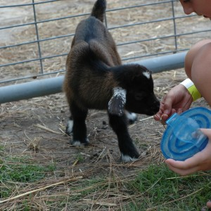 Hunt Club Farm - Petting Farm